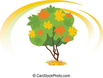 jesień, drzewo, klon