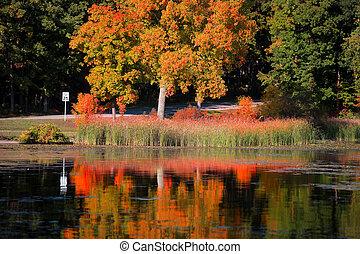 jesień, drzewo, odbicia