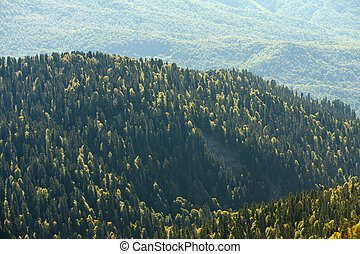 jesień, góra, forrest