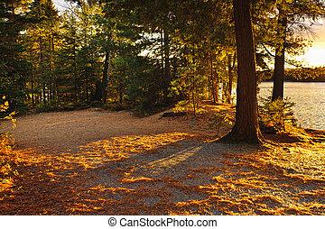 jesień, jezioro, drzewa