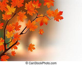 jesień, kolor, drzewo., klon