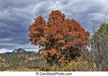 jesień, kolor, pod, burzowe niebo
