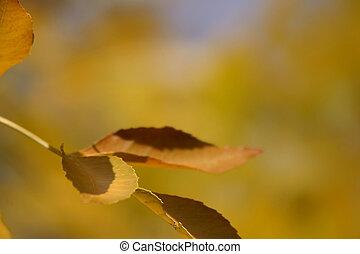 jesień, kolor