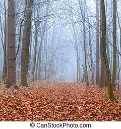 jesień, mglisty las, ciągnąć