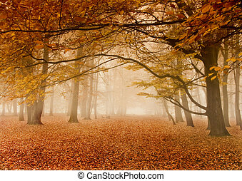 jesień, mglisty