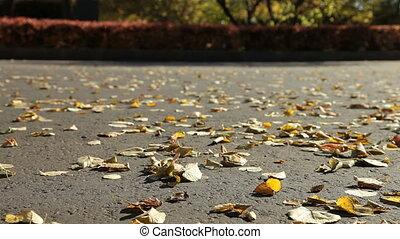 jesień, miasto park