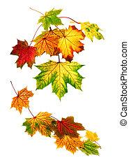 jesień, na dół, liście, spadanie, barwny