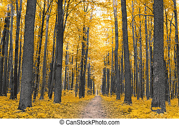 jesień, nature., las