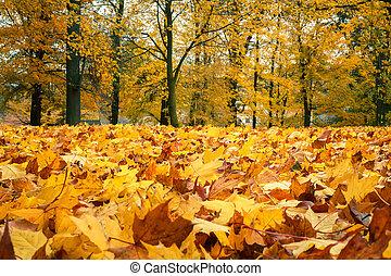 jesień, nieruchome życie, z, żółty, klonowe listowie