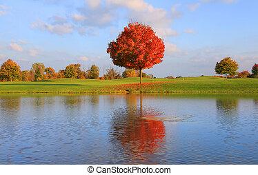 jesień, odbicie drzewa