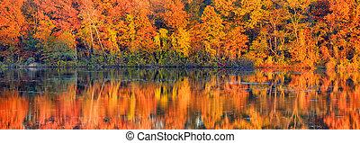 jesień, panoramiczny, drzewo, odbicia, prospekt