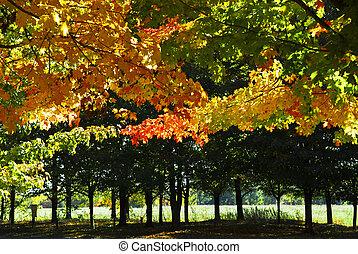 jesień, park, drzewa, upadek