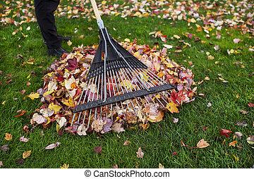 jesień, podczas, dziedziniec, czyszczenie do góry
