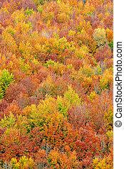 jesień, pora, kolor, upadek