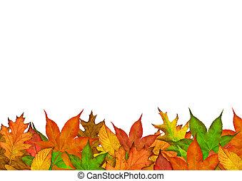 jesień, pora, liście
