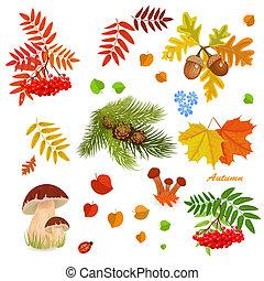 jesień, projektować, twój, zbiór