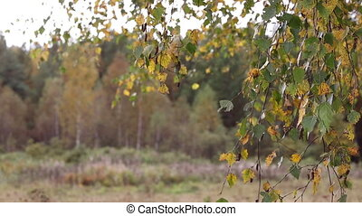 jesień, ruszać się w jedną i drugą stronę, liście, wind., ...