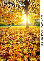 jesień, słoneczny, liście