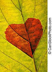 jesień, serce, liść