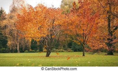 jesień, trawa, liście, tło, upadek