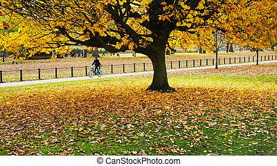 jesień, w parku
