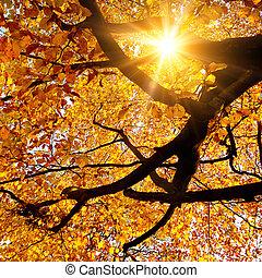 jesień, złoty, lustrzany, słońce