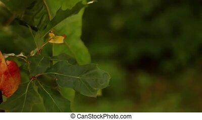 jesień, zamazany, 1920, las, tło, hd, jagoda