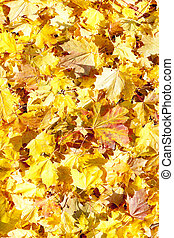 jesienny, liście
