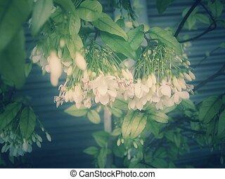 Jessamine flower - vintage style