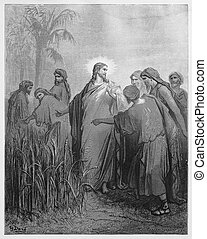 Jesus tells the disciples that they may pick corn - Picture from The Holy Scriptures, Old and New Testaments books collection published in 1885, Stuttgart-Germany.