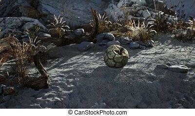 jeté, mensonges, mer, vieux, balle, sable, déchiré, football...
