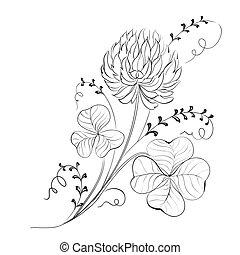 jetel, květiny, isolated.