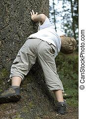 jeter un coup d'oeil furtif, arbre, autour de