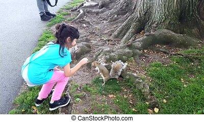 jeu, alimentation, écureuil, girl, park., animaux familiers, outdoors., jouer, gosse