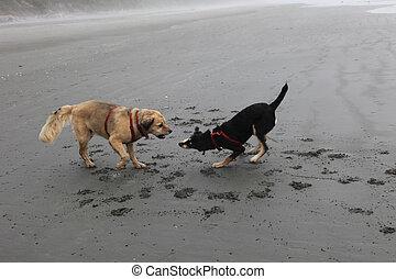 jeu, plage, combat