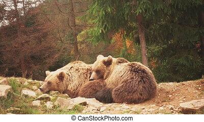 jeune, agréable, ensemble, deux, jouer, ours