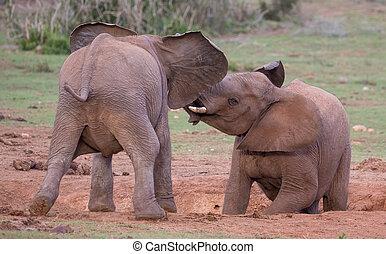 jeune, amis, deux, salutation, éléphants