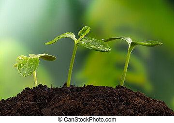 jeune, usines, dans, la terre, concept, de, nouvelle vie