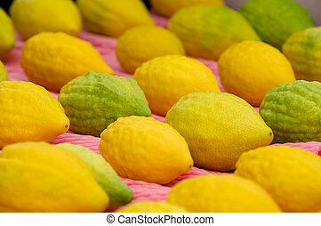 Etrog, the yellow citron is on display at a four species market for the Jewish holiday of Sukkot. The Four Species are waved together along with special blessings during Sukkot.