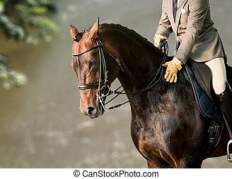 jezdec, dále, jeden, kůň