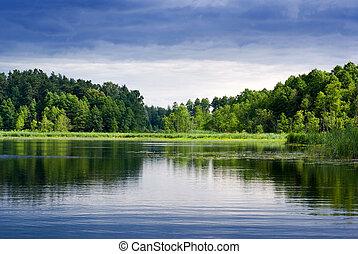 jezero, a, forest.