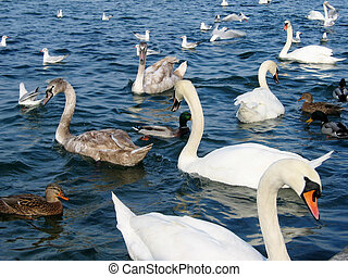 jezioro, ptaszki