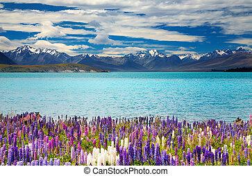 jezioro tekapo, nowy zealand