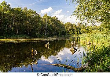 jezioro, w, lato