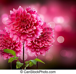 jiřina, podzim, květiny