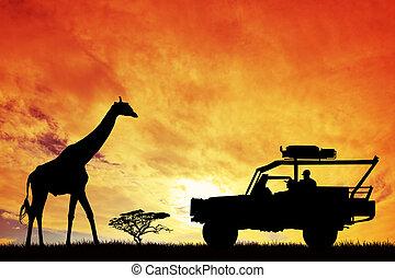 jipe, safari