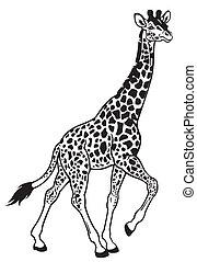 jirafa, negro, blanco