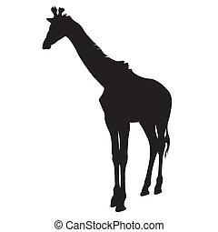 jirafa, silueta, vector