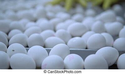 job farm production - white chicken eggs on softing line ...