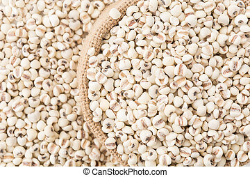 job's-tears of millet on white background